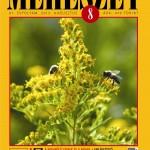 Méhészet2013_8