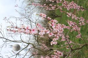 Veszprém_Őszibarack2_Tavaszi fenológia_Méhészújság_2021